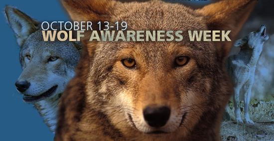 Wolf Awareness