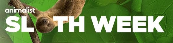 sloth week