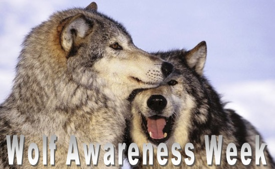 Wolf Awareness Week